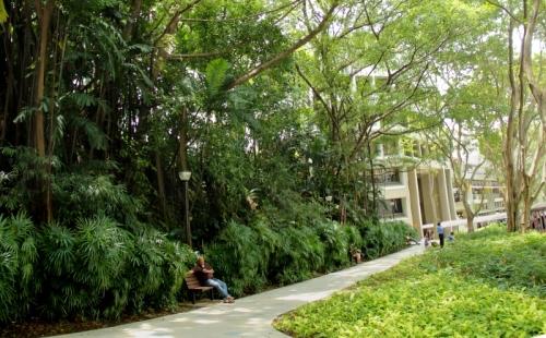 forest garden pano